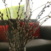 Pussy willow home decor