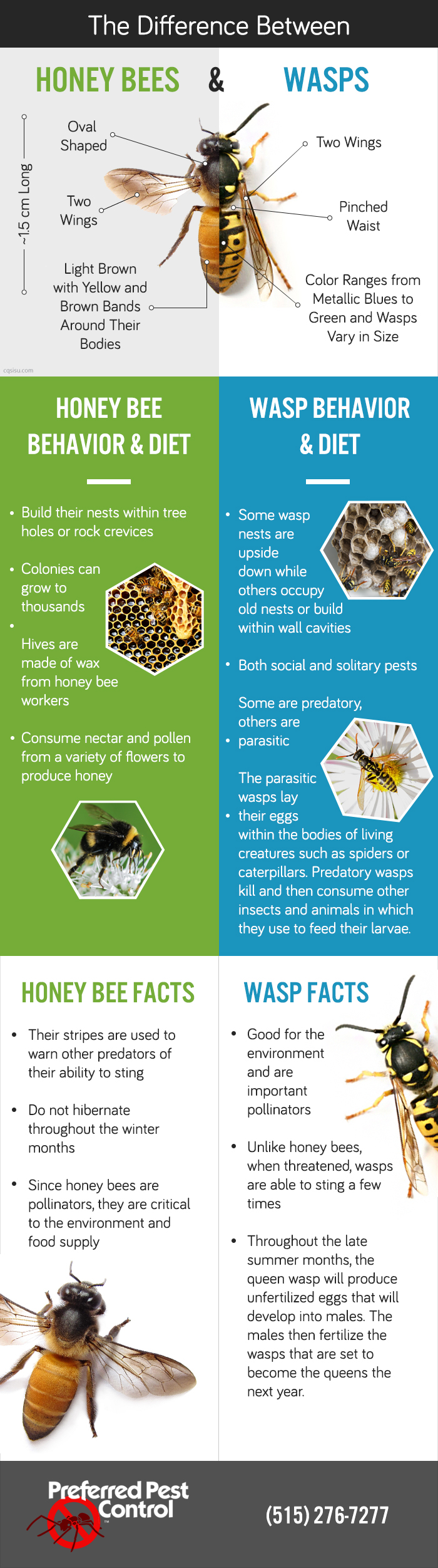 honeybee-and-wasps-updated