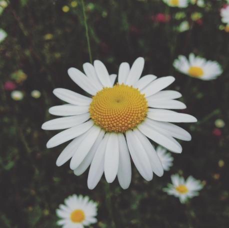 Sweet Spring memories