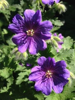 Flowers in Bavaria