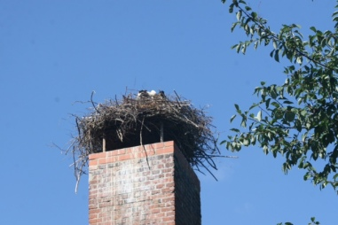 A stork in the nest