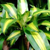 9 House Plants that I actually didn't kill