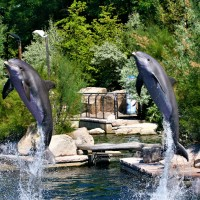 Taking Flight higher like Dolphins